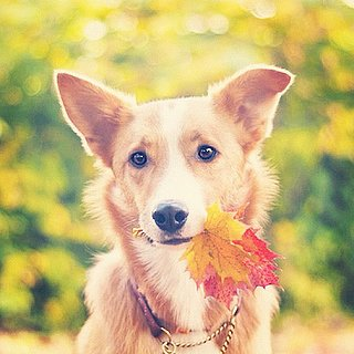 Dogs and Cats in Fall Leaves