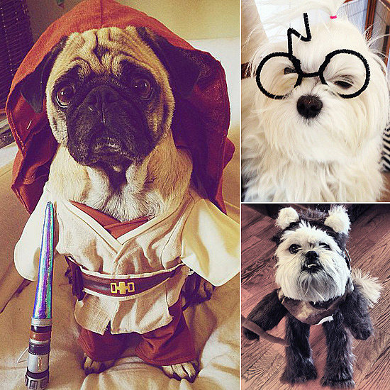Dog-tor Who, Harry Paw-ter, and Other Geeky Pups