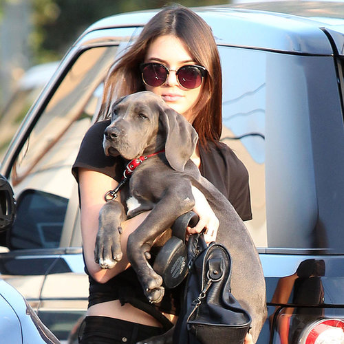Kendall Jenner's New Dog | Photos