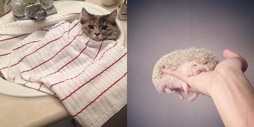 8 Hacks For a Good Snooze (as Told by Cute Animals)