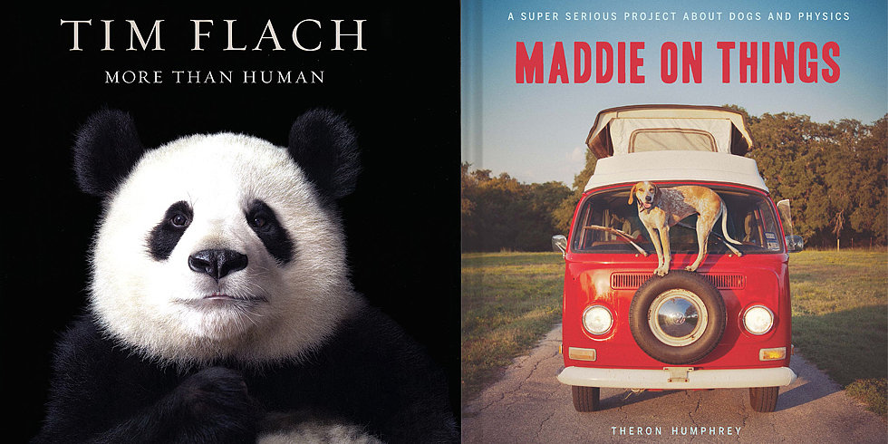 Animal Books For Everyone on Your Holiday Gift List