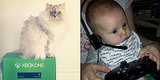 9 Kids and Cats Totally Unimpressed by Xbox One