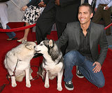 At the LA premiere of Eight Below in February 2006, Paul Walker posed with snow dogs on the red carpet.