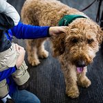 Dogs Relieve Stress at Airports