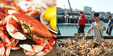 Dungeness Crab Season: 10 Things You Need to Know