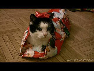 How to Wrap a Cat I Video