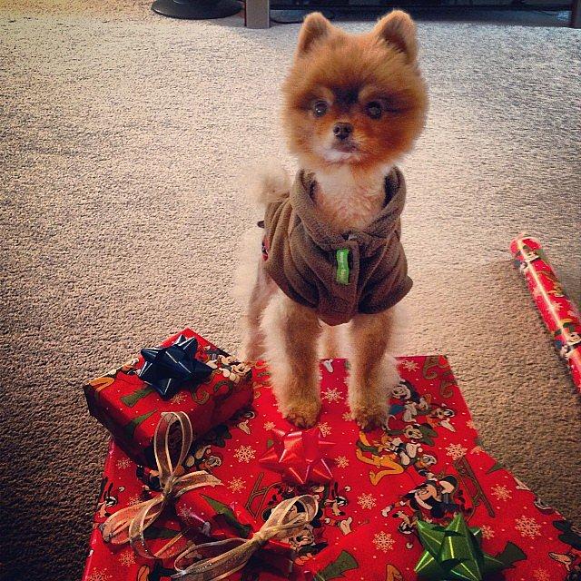 Presents, Please