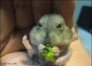 Veggie Nibbles