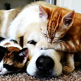 Dog and Cat GIFs