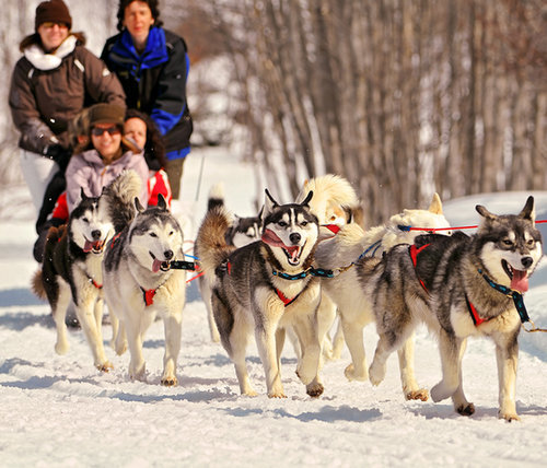 Go Dogsledding