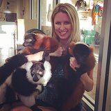 Nicky Hilton cuddled with a bunch of lemurs at Jungle Island in Miami. Source: Instagram user nickyhilton