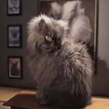 Colonel Meow Dies