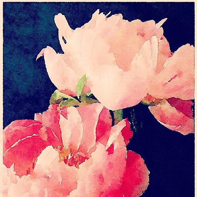 A Favorite Flower