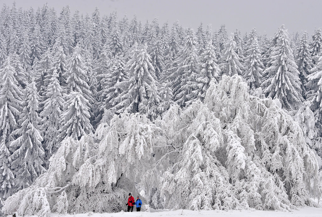 Trees in Masserberg, Germany, were covered with snow.