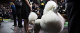 Is Dog Fashion Week Better Than Regular Fashion Week?