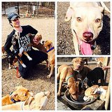 Ian Somerhalder was attacked by all his cute puppies. Source: Instagram user iansomerhalder