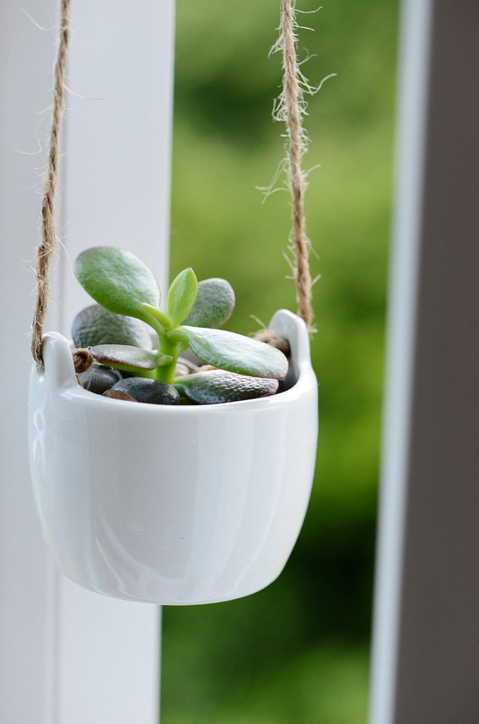 You already know that the jade plant is one of the easiest to keep, so snap up the succulent ($17-$22) in a cute ceramic hanging pot.