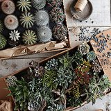 9 Reasons Succulents Aren't Going Away Anytime Soon