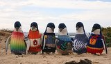 Penguins Rescued From Oil Spills in Need of Knitted Sweaters