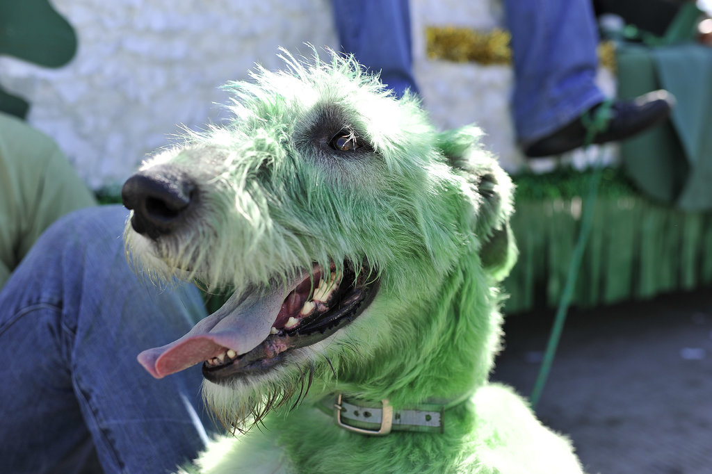 Or, you know, their fur is dyed green.