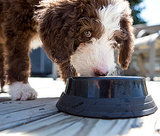 Best Pet Food for Puppies
