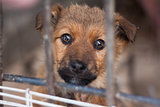Myth: Dogs Who Have Been Mistreated Are Spoiled Forever