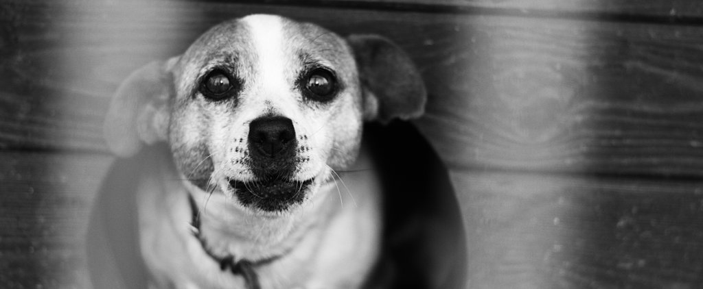 10 Myth-Busting Realities About Shelter Dogs