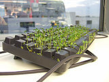 Chia Pet Keyboard