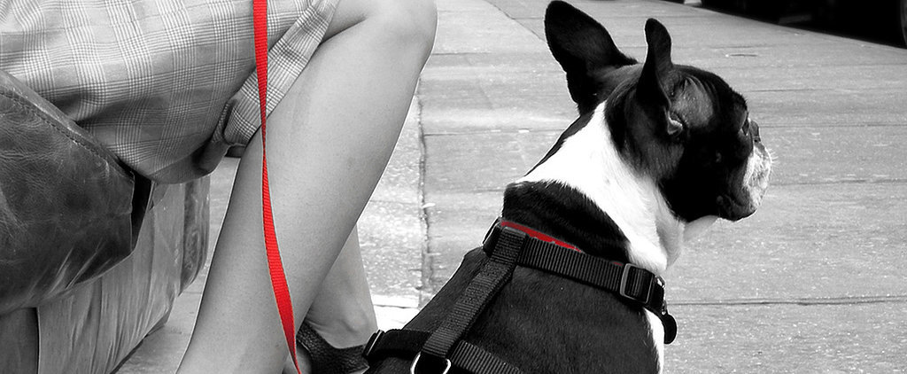 Pet-iquette For Your Pooch When Out and About