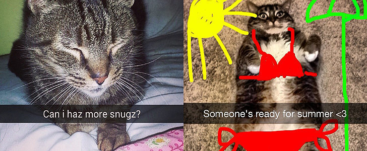 Cats Who Put Your Snapchat Game to Shame