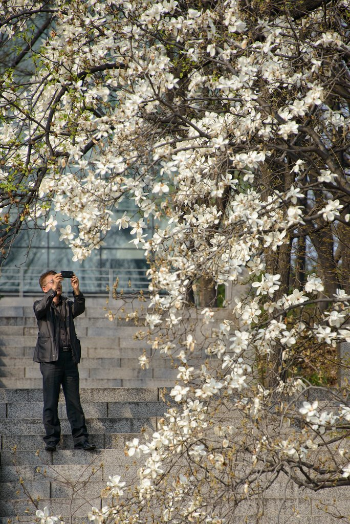 A man in South Korea snapped pictures of Seoul's blossoming trees.