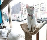 Cat Café Opens in New York