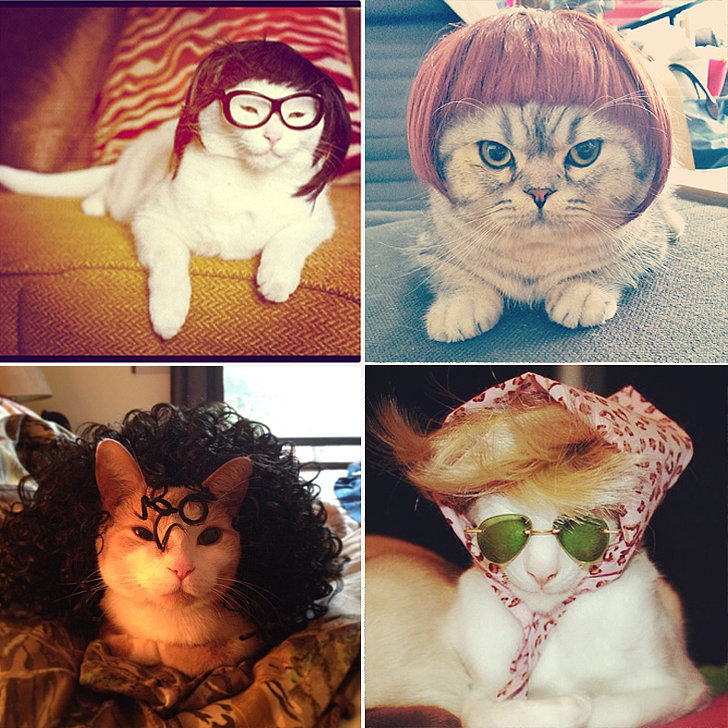 Is There Anything Better Than Cats Wearing Wigs?