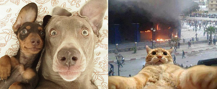 20 Animal Selfies That Are Shutting It Down