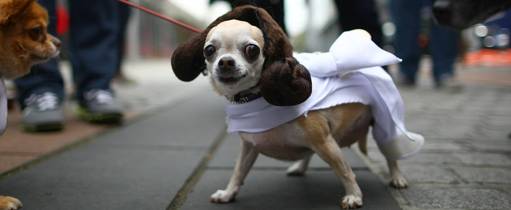 Dogs With Geeky Halloween Costumes Way Better Than Yours
