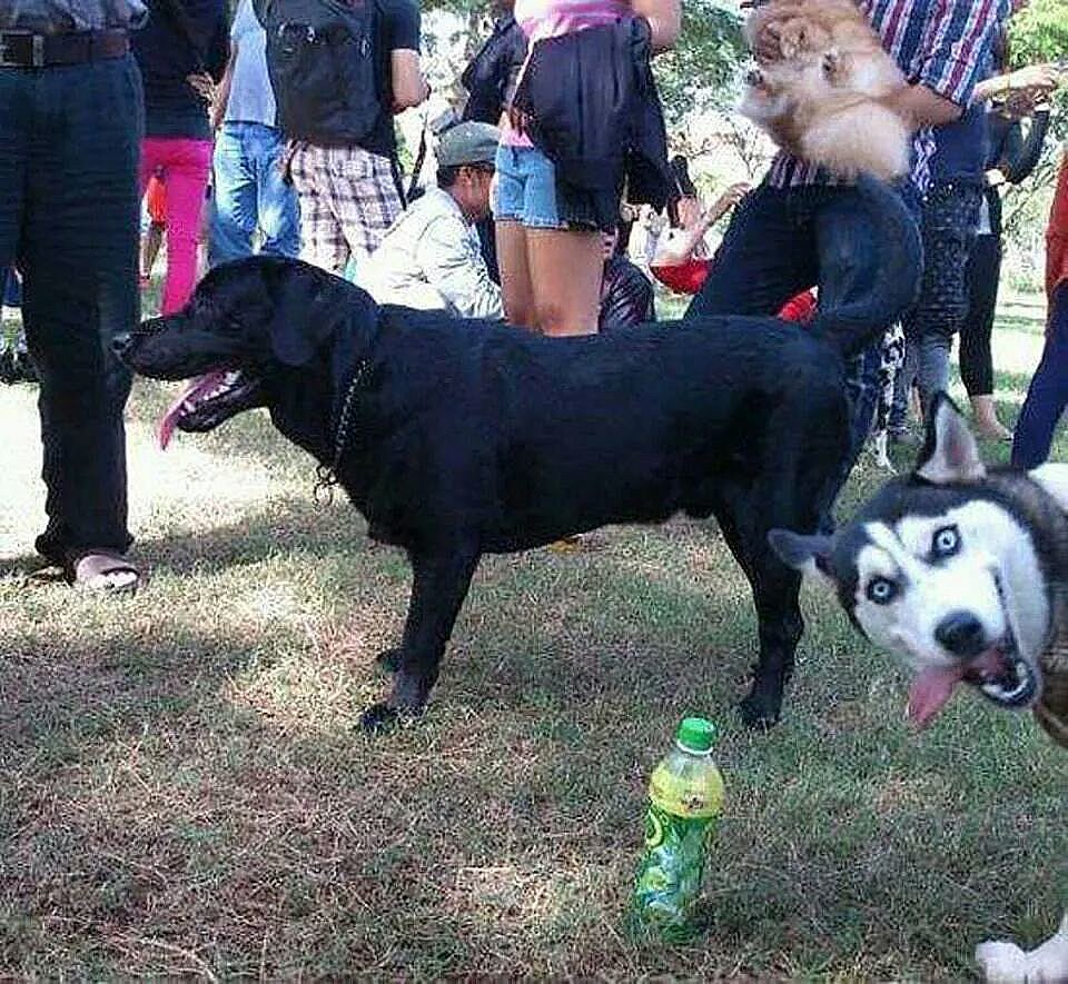 15 Animal Photobombs That Can't Be Unseen