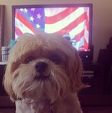 Nilla Vanilla proudly stands in front of the American flag before the game. Source: Instagram user nillavanilla_lhasa