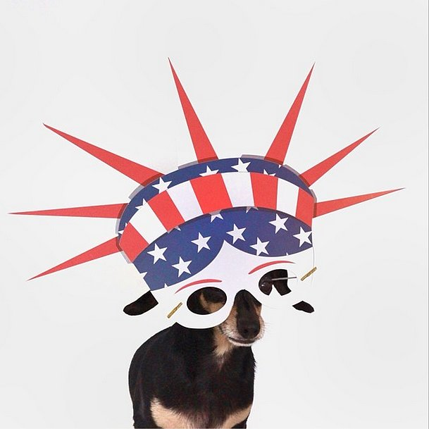 Ladybug the Doxiehuahua makes being a USA fan look superfierce. Source: Instagram user ladybug_the_doxie