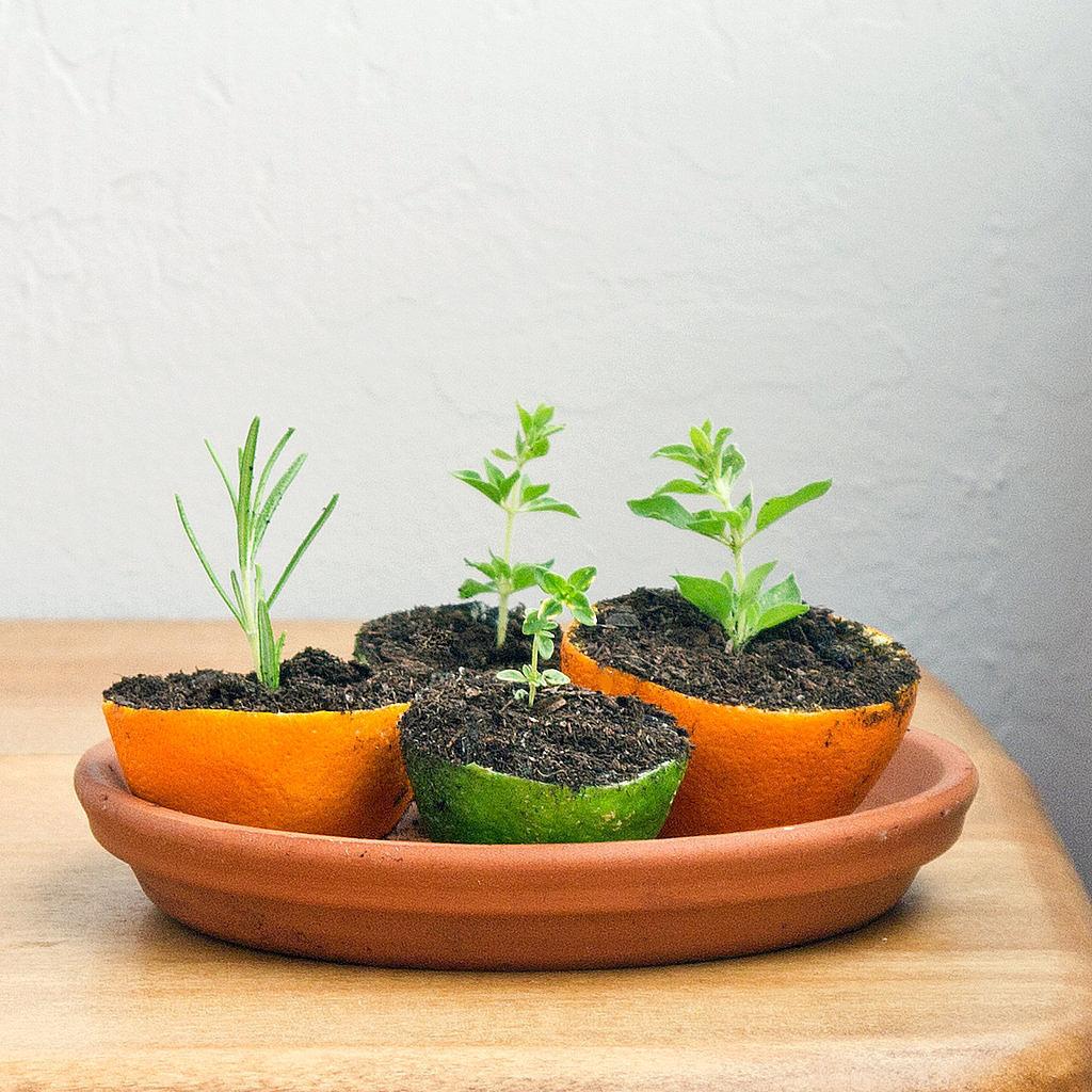 Grow a Herb Garden