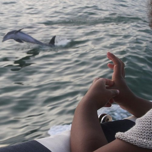 Blue Carter caught a dolphin show from the deck of a boat. Source: Instagram user beyonce