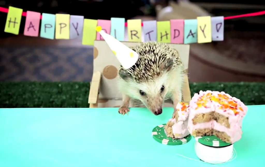 Hedgehog Eating Tiny Cake