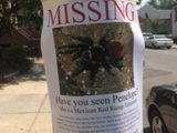 A Pregnant Tarantula Is On The Loose In Brooklyn