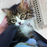 Our Monday Miracle Is Bug A Boo, the Adorable Hydrocephalus Kitten