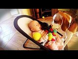 Dog begs baby's forgiveness (WATCH!)