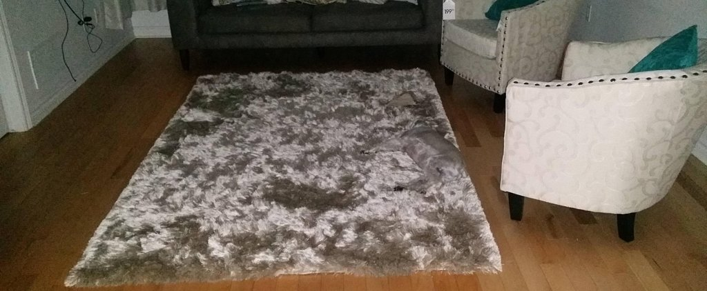 This Dog Takes Blending In at Home to a Whole New Level