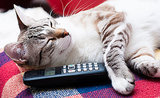 7 Voicemails Only Cats Would Leave You