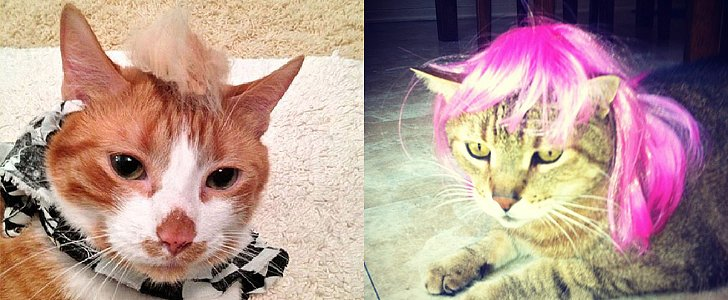 10 Cats That Don't Care About Your Bad Hair Day