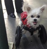 Little Miss Lexi Wheels Around NYC Like a Star