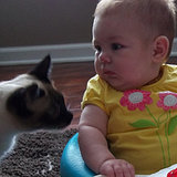 So, My Cat Is Teaching My Baby How to Be a Cat