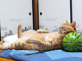 Tell This Cat that Watermelons Don't Make Good Pillows